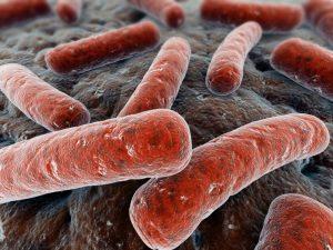 возбудители туберкулеза у человека