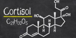 кортизон гормон отвечает в организме человека за