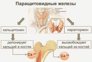 кальцитонин инструкция по применению