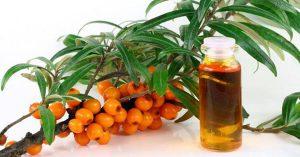облепиховое масло лечебные свойства